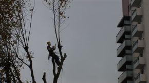 Un arbre, une route – lamusique